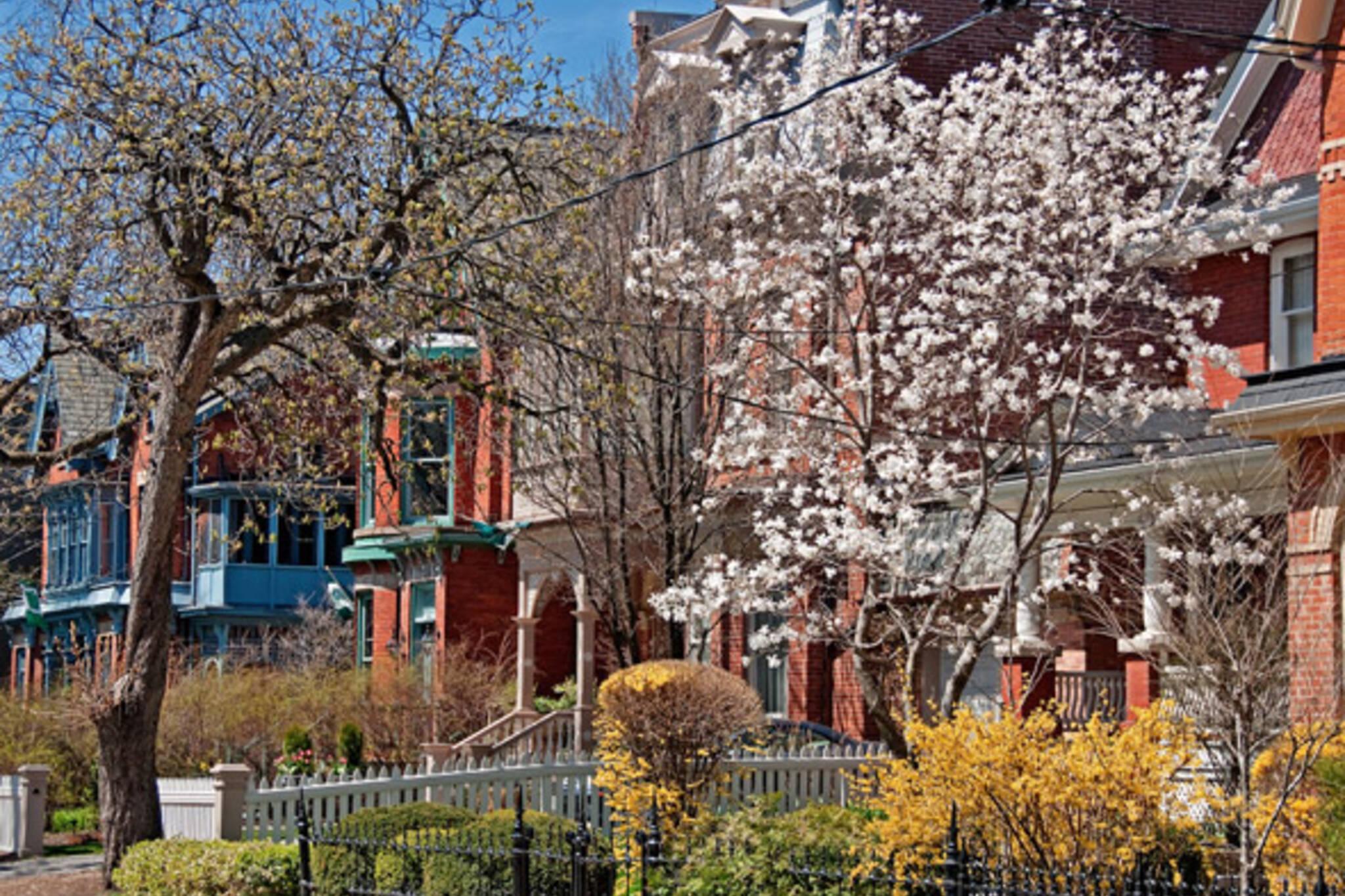 Spring Toronto blossoms