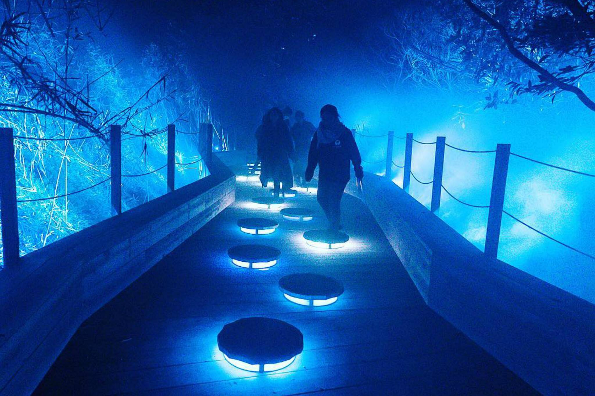 toronto zoo light exhibit