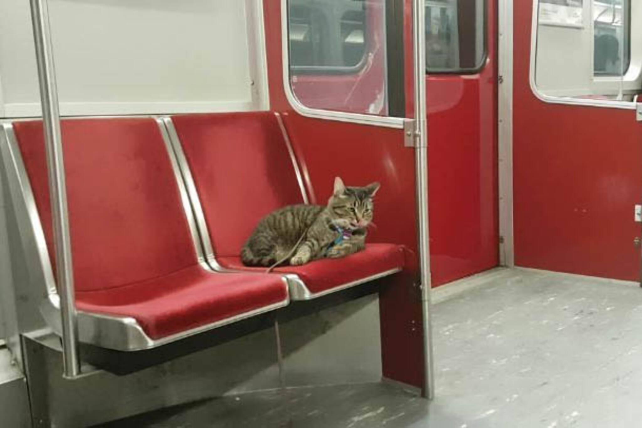 subway cat toronto