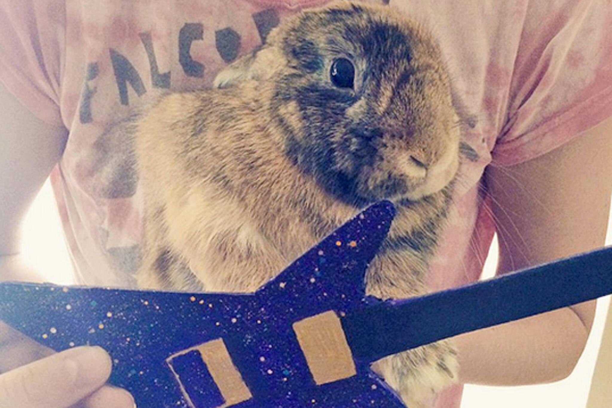 Bunnies Toronto Twitter