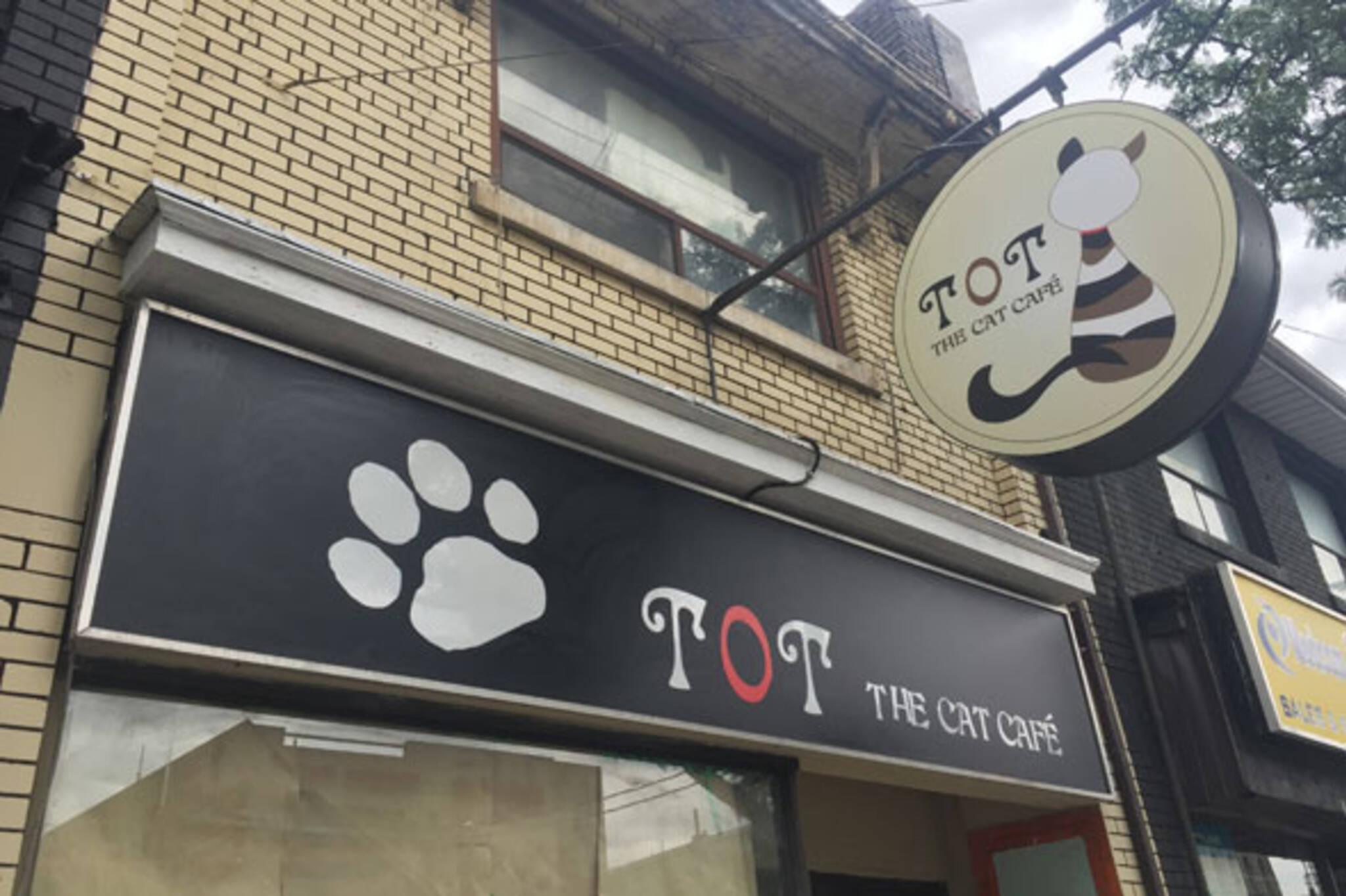 cat cafe toronto