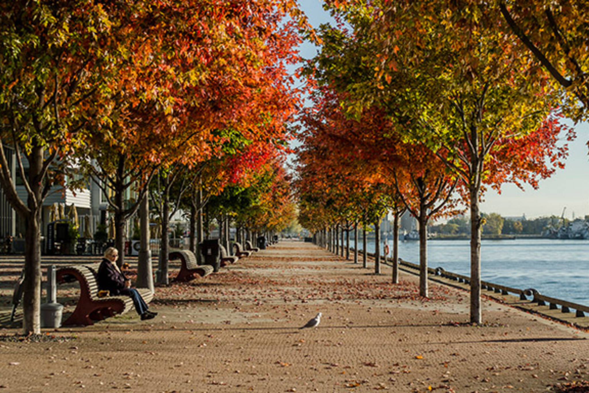 Toronto waterfront fall