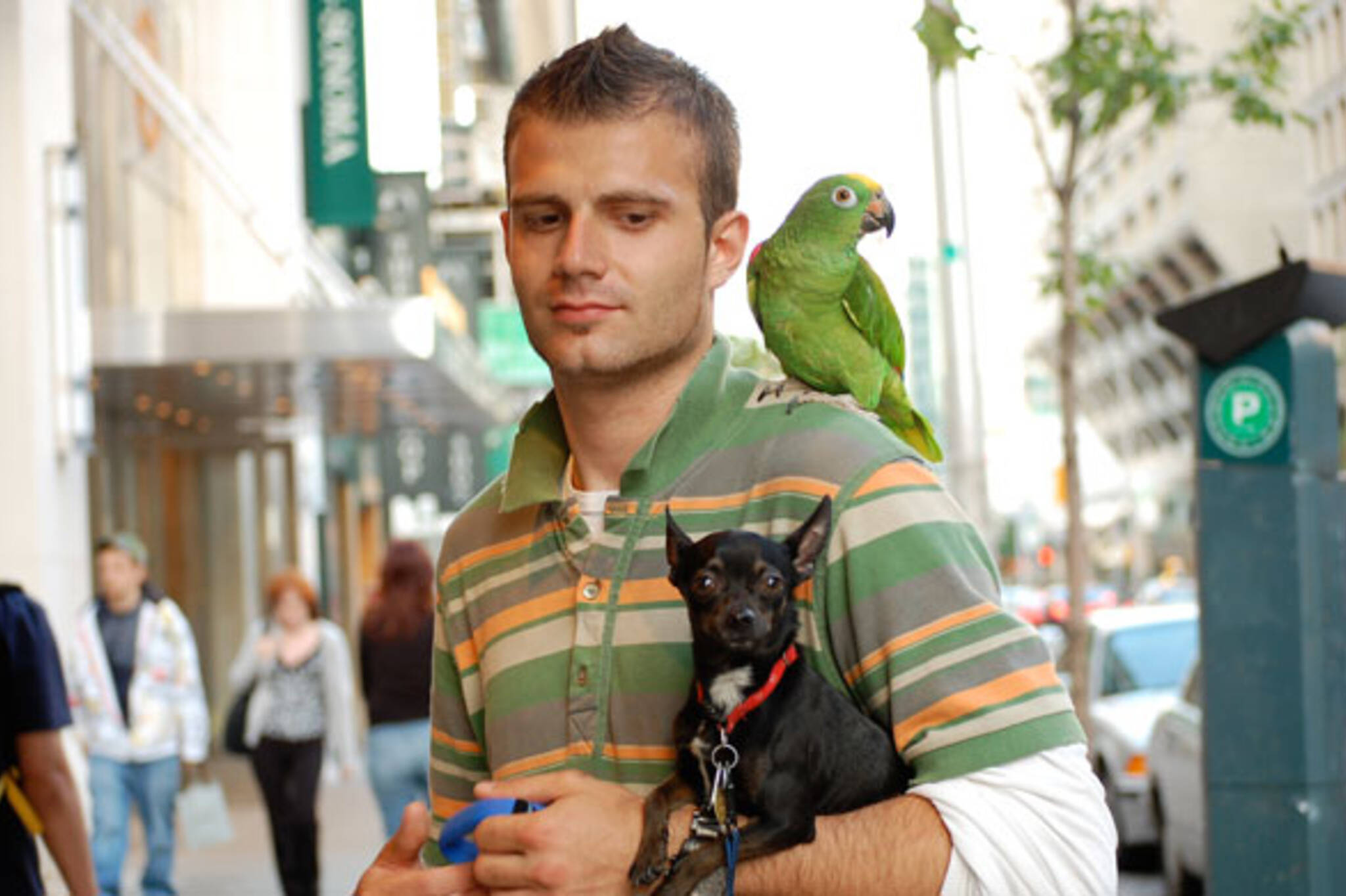 Parrot for hire