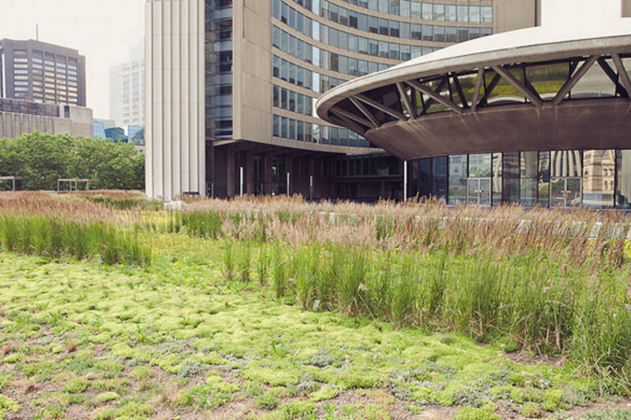 Toronto Green Roofs